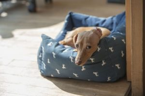 Dog in a pet bed